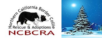 Northern California Border Collie Rescue & Adoptions